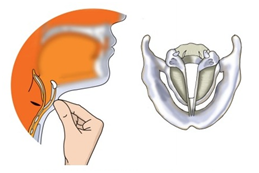 diagram of human ear for class 8
