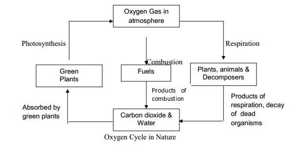 Explain nitrogen cycle oxygen cycle and carbon cycle dronstudy carbon cycle carbon dioxide gas is produced and added into the atmosphere by i burning of fossil fuels ii the respiration of plants animals iii the ccuart