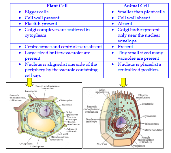 The fundamental unit of life ncert exemplar dronstudy part 3 q54 illustrate only a plant cell as seen under electron microscope how is it different from animal cell ccuart Image collections