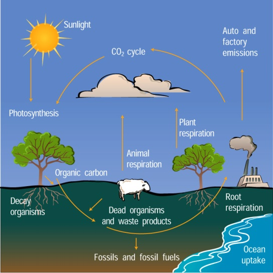 https://www.windows2universe.org/earth/climate/images/carboncycle.jpg